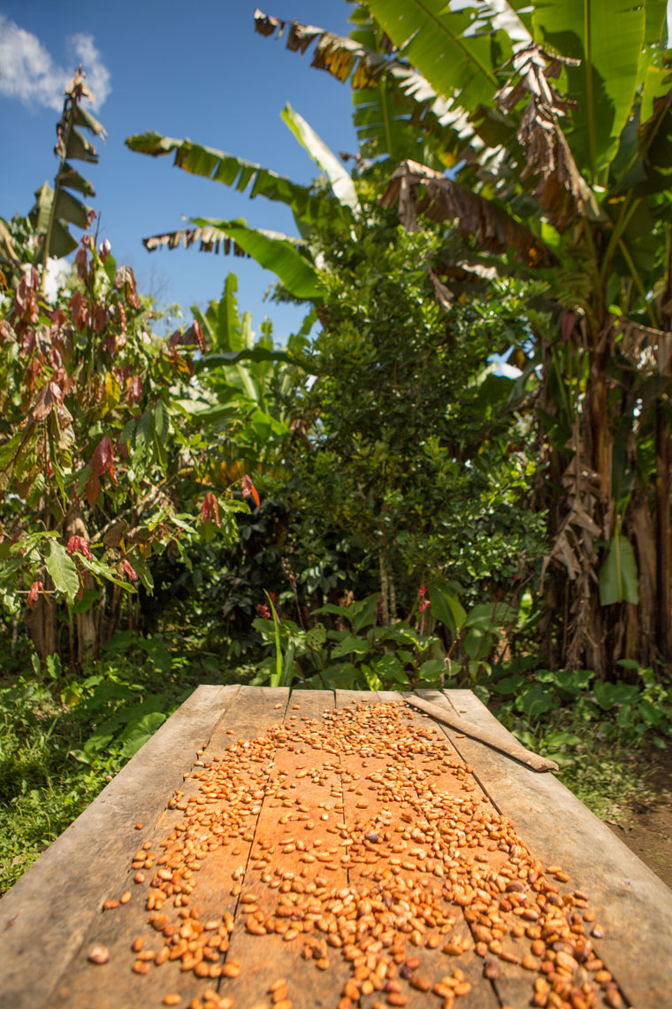 03_Kris_Davidson_National_Geographic_Cacao_Bean_Ecuador_Amazon
