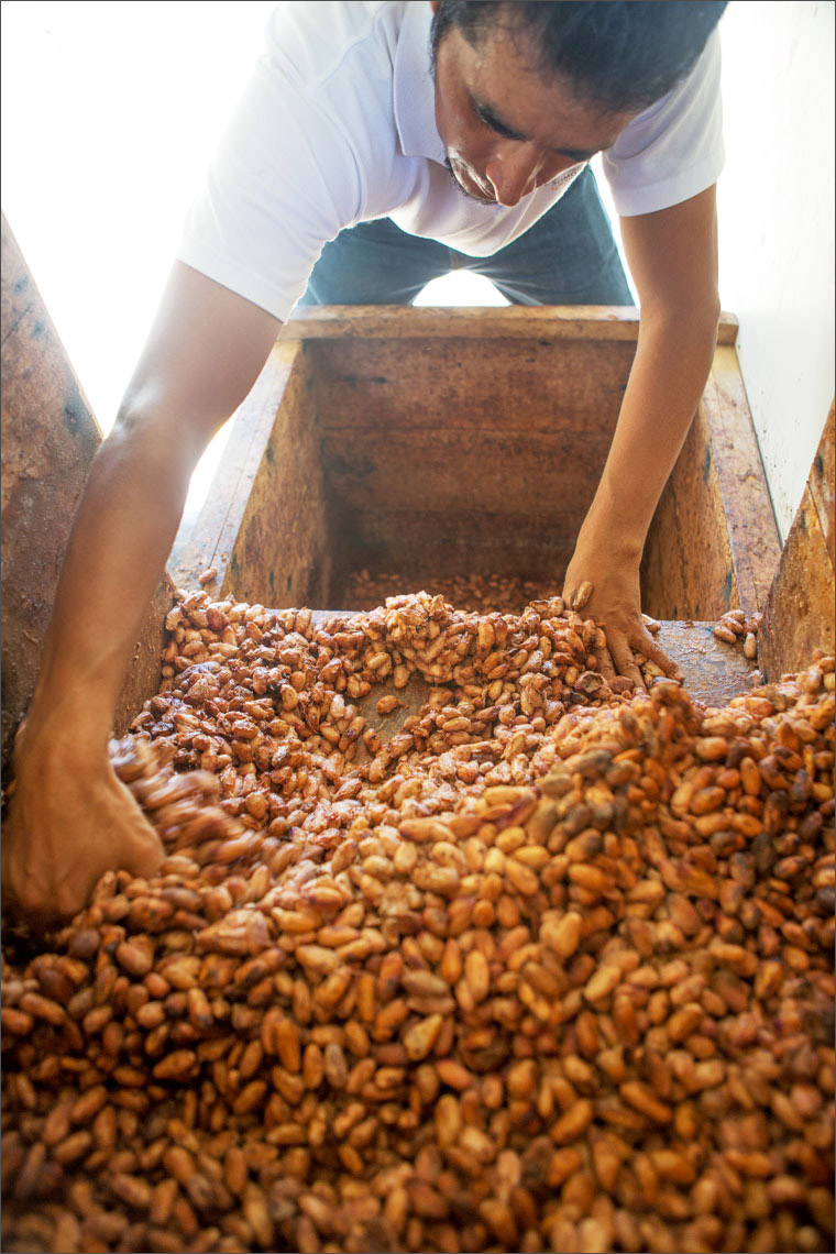 04_Kris_Davidson_National_Geographic_Cacao_Bean_Ecuador_Amazon