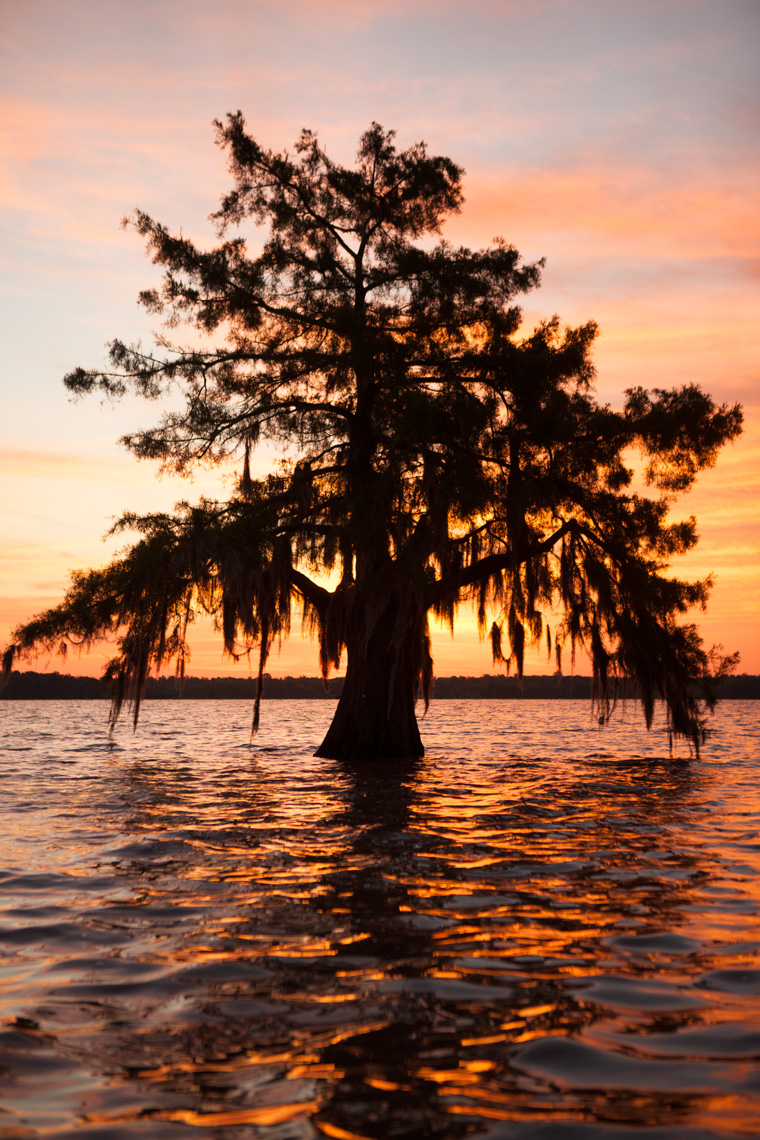 Kris_Davidson_Louisiana_Swamp_Tree_028